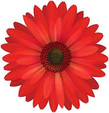 red flower bloom blossom flowers
