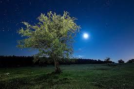 green and black tree night starry sky