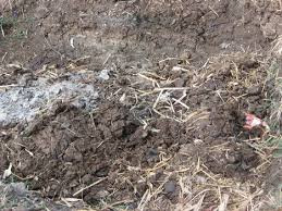 cow dung a posted fertilizer