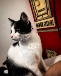 E alla fine arriva Polly ❤️ meow cat gatto