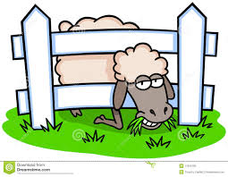 Sheep And Fence Stock Vector Illustration Of Stuck Cartoon 17040183