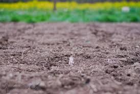 back to eden gardening my experience