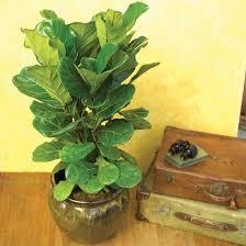 plants house plants indoor plants