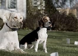 How To Use An Electronic Dog Training Collar K9 Electronics Blog