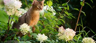 stop cats from fouling in your garden