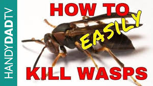wasps the easy way you