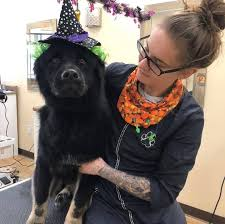 Monica Taylor - Pet Stylist/Canine Behavior Specialist - Avis ...
