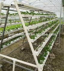 china greenhouse vegetable china