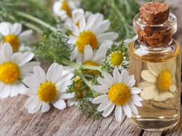 Chamomile Oil & Chamomile | Essential Oils | Andrew Weil, M.D.