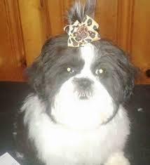 Michael's Pet Grooming & Boarding - Pet service - Killeen, Texas   Facebook  - 63 reviews - 182 photos