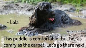 how to get dog smell out of carpet