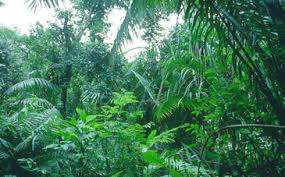 Floresta Tropical - Só Biologia