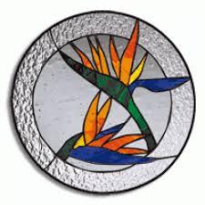 bird of paradise birdofparadise bird