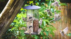 Diy Fun And Creative Ideas For Bird Feeders Shetland S Garden Tool Box