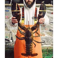 1 Live 4-6lb. Maine Lobster