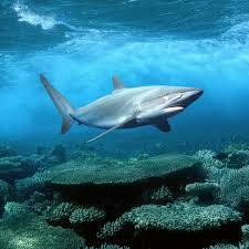 ipad retina hd wallpaper shark ipad