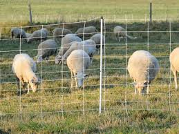 Dry Soil Tips For Electric Fences Premier1supplies Sheep Guide