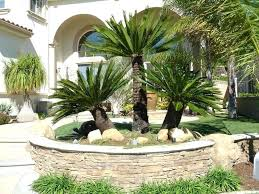 palm tree landscape ideas pulpivilla co