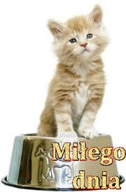 Gify Milego dnia | Dzień dobry, Zwierzęta