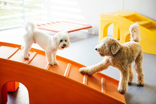 Image result for Doggy Day Care Services""