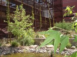 rainwater harvesting a green