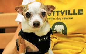 Muttville Senior Dog Rescue ...