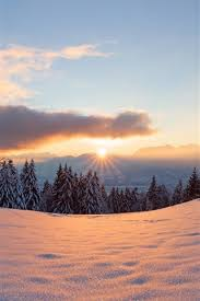 winter snow sun light forest trees
