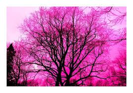 la vie en rose art print by aliss art