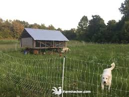 The 2 Best Poultry Netting Fences In 2020 Farmhacker Com