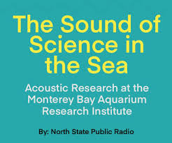 the sound of science in the sea 90 3 kazu