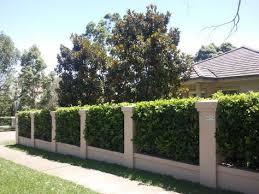 Viburnum Hedge Between Rendered Brick Fence Pillars Front Yard Hedges Garden Hedges Fence Design