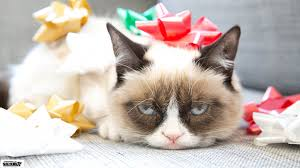 grumpy cat desktop background posted by