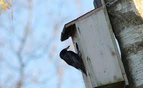 le nichoir à oiseau ment le