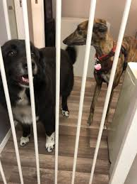 """Cherie Priest on Twitter: """"Picked up the kids from the groomer! Greyson  made a new friend :) (Lucy did too, then she shoved her friend out of the  way to get to"""