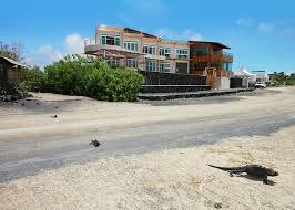 iguana crossing galapagos islands