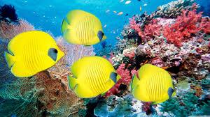 4k Ultra Hd Fish Wallpapers Top Free 4k Ultra Hd Fish