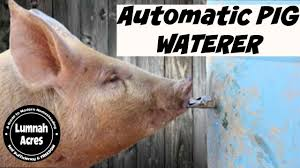 automatic pig waterer you
