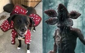 stranger things demogorgon dog costume