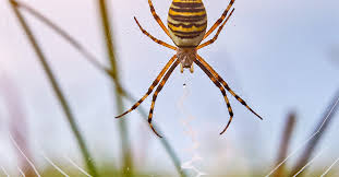 spider bites identify what bit you and