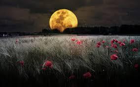 Moon Flowers HD HD wallpapers free download | Wallpaperbetter