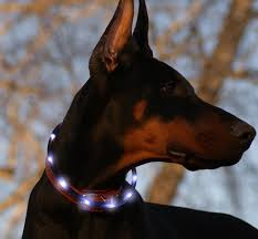 Pin On Collars Harnesses And Leashes