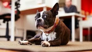26 giugno, la Giornata mondiale del cane in ufficio