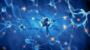 Neuronas se desarrollan hasta los 90 años | HISPANTV