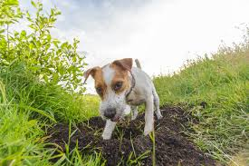 What Can I Spray To Stop My Dog From Digging Rehome By Adopt A Pet Com