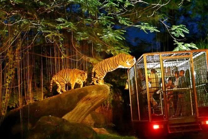 Image result for singapore night safari""