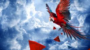 51 scarlet macaw hd wallpapers