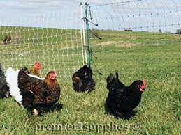 Select The Best Electric Fence Design For Your Poultry Premier1supplies