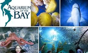 half off at aquarium of the bay