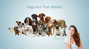 all dog breeds archives a z pet guide