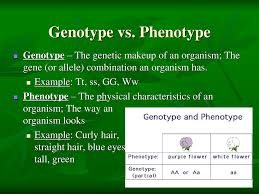 the basic laws of genetics ppt